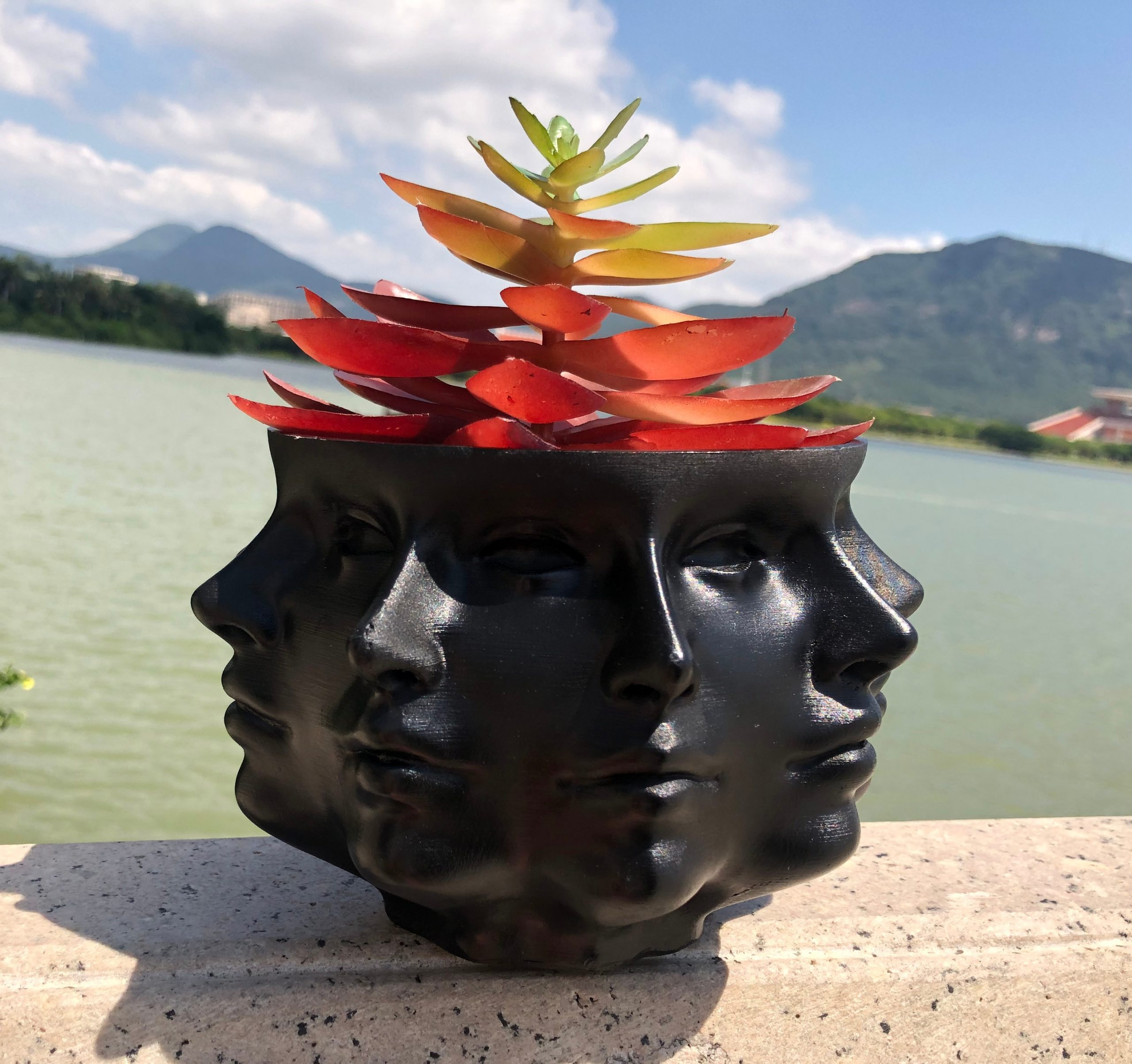 Multi-Face Succulent Planter in Black and White